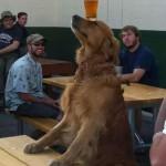 Beer Dog